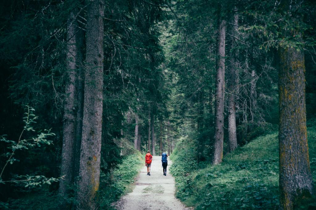 Gemischter Nadelwald - Valdivianischer gemäßigter Regenwald